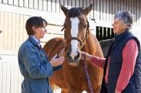 Horse-veterinarian-rabies