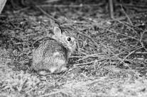 re_bunny