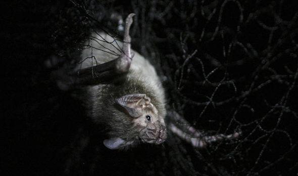 bats-1528290