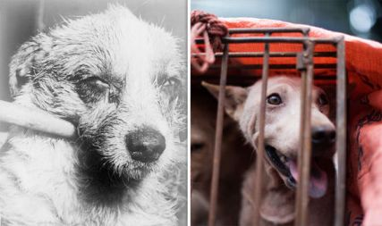 dog-meat-south-korea-china-vietnam-rabies-yulin-dog-eating-1024163.jpg