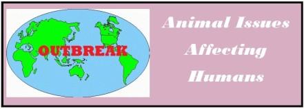 animal11.jpg