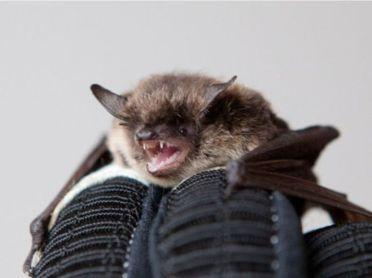 bats_2